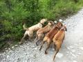 Annie Dog hiking pack