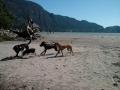 Annie's dogs at Nexen Beach